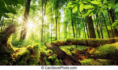 bosque, paisaje, con, hermoso, rayos sol