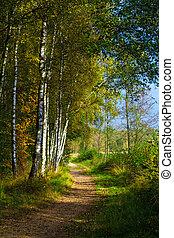 bosque, paisaje., hermoso, paisaje