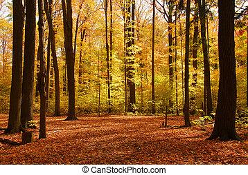 bosque, paisaje, otoño