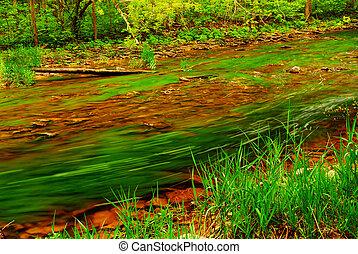 bosque, río