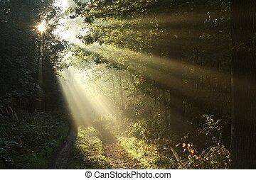 bosque, rastro, en, salida del sol