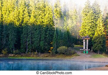 bosque, reflexión, en, brumoso, superficie, de, synevyr, lago