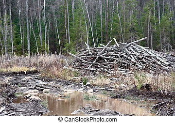 bosque, residues, tala, waste;, clearfell, boreal