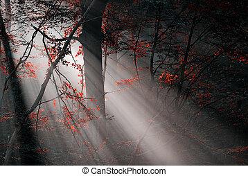 bosque, rojo