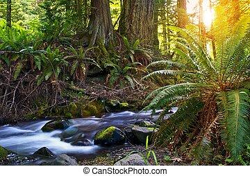bosque, salida del sol