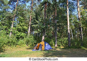 bosque, tienda, campamento