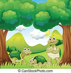 bosque, tres, tortugas