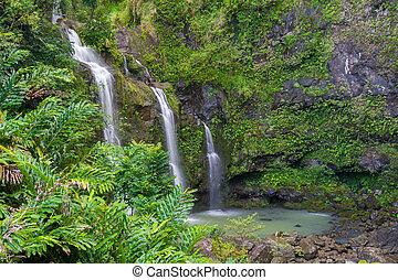 bosque tropical, tres, cascadas