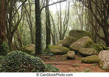 bosque verde, árboles, con, inmenso, rocas