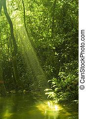 bosque verde, con, reflexión de agua