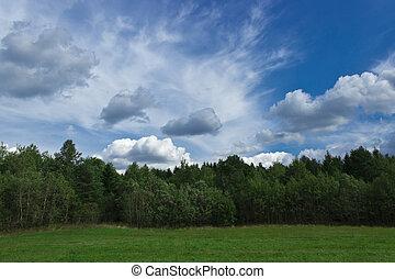 bosque verde, debajo, un, colorido, cielo
