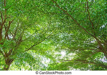 bosque verde, luz del sol