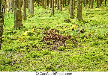 bosque verde, piso