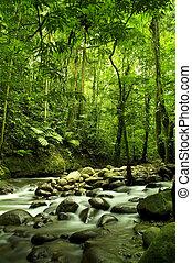 bosque verde, y, río
