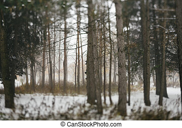 bosque, wintery