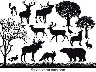 bosque, y, fauna