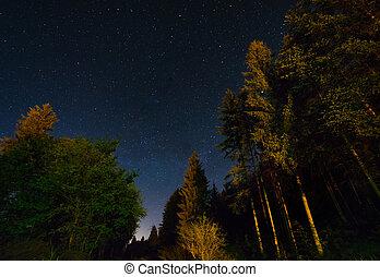 bosque, y, un, cielo de la noche, lleno, de, estrellas