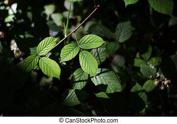 bosque, zarza, hojas, piso