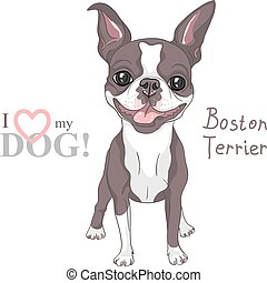 bosquejo, boston, casta, perro, vector, sonriente, terrier