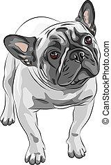 bosquejo, bulldog, casta, perro doméstico, francés, vector