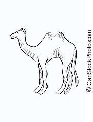 bosquejo, camello