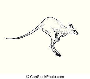 bosquejo, canguro, vector