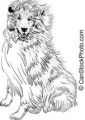 bosquejo, casta, perro, ?ollie, mano, vector, áspero, dibujo