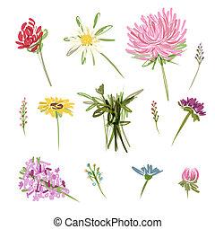 bosquejo, conjunto, jardín, flores, diseño, su