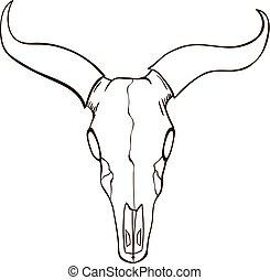 bosquejo, cráneo, toro