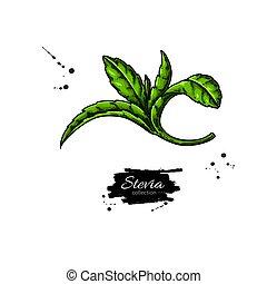 Producto, iconos, sano, etiquetas, stevia, azúcar, vector