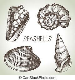 bosquejo, elementos, set., mano, diseño, conchas marinas, ...