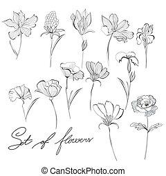 bosquejo, flores
