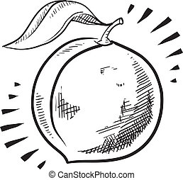 bosquejo, fruta, melocotón