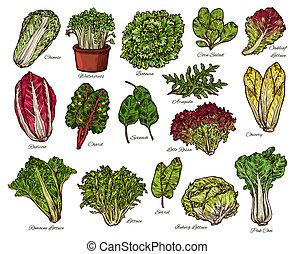 bosquejo, granja, vegetales, lechuga, vector, ensaladas