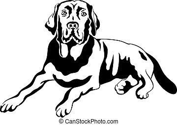 bosquejo, labrador, casta, perro, vector, labradores