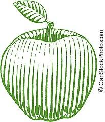 bosquejo, manzana, vectorized, ilustración, verde, tinta