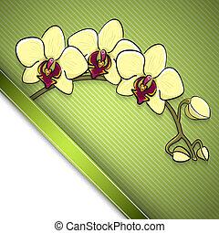 bosquejo, plano de fondo, orquídea