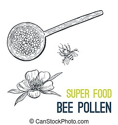 bosquejo, pollen., alimento, mano, vector, dibujado, abeja, súper