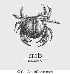 bosquejo, resident., style., vector, marina, crab.