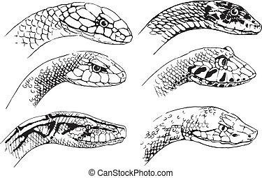 bosquejo, serpientes