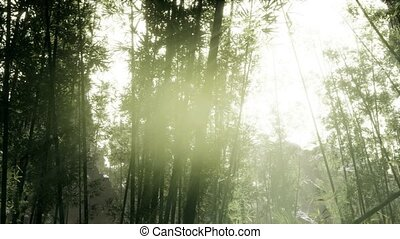 bosquet, arashiyama, bambou, tranquille, venteux