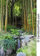 bosquet, bambou, ruisseau