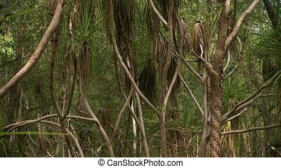 bosquet, large, paume, coup, arbres