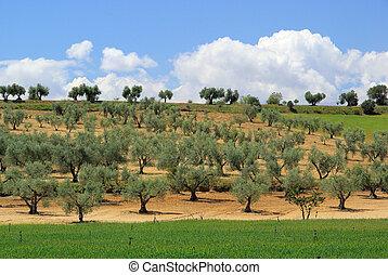 bosquet vert olive, 14