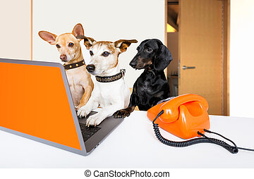 boss management dogs in office