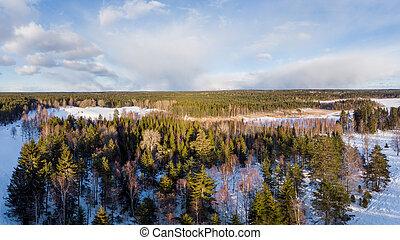 bosterrein, landscape, in, winter
