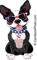 boston, 4 julio, terrier