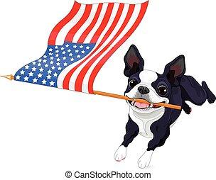 boston, executando, terrier, bandeira