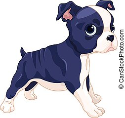 Boston Terrier Cub - Illustration of cute Boston Terrier cub