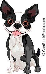 Boston Terrier  - Illustration of cute Boston terrier